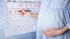 tüp bebekte hamilelik hesaplama