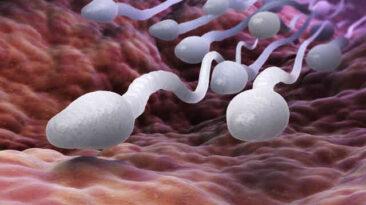 sperm alerjisi olup hamile kalanlar